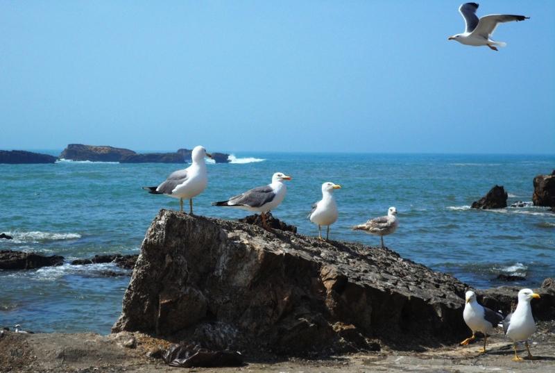 Zorka Hejdova na dovolene Essaouira (2)