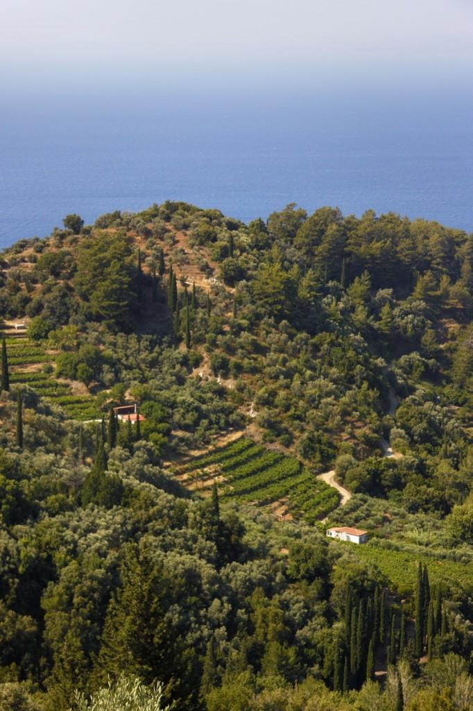 Samos vineyards2